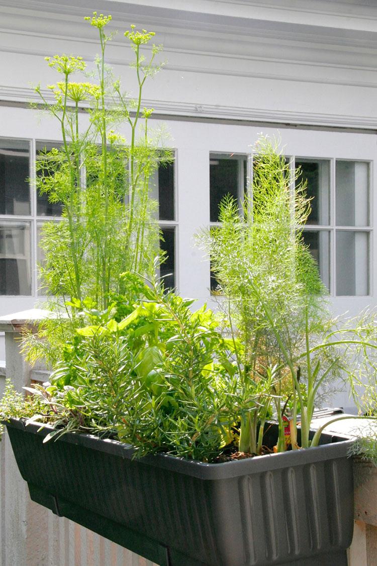 Herb Garden Window Box   Garden Designs